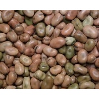 Fava, Broad Beans / 500g